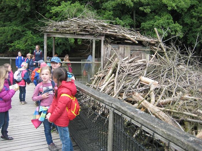 Die Biberburg im Tierpark Olderdissen