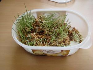 Klassenfoto 3d, Vom Korn zum Brot 082